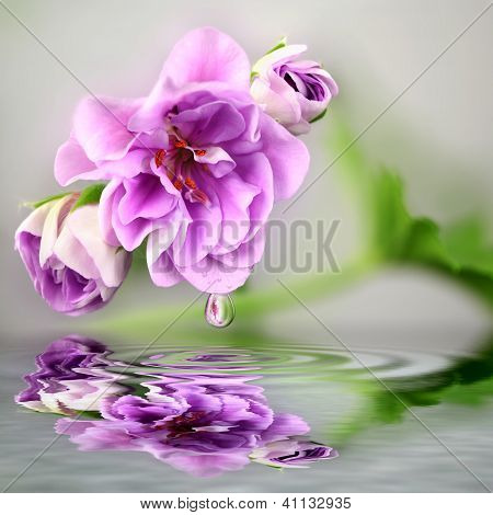 Flower with water reflection