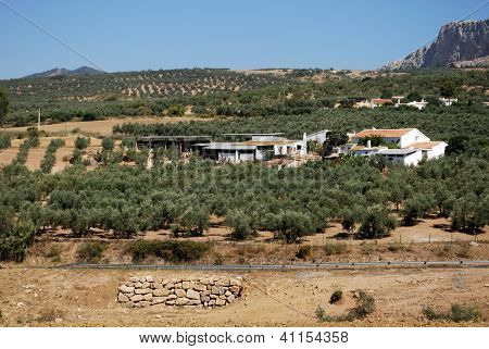 Farmland, Andalusia, Spain.