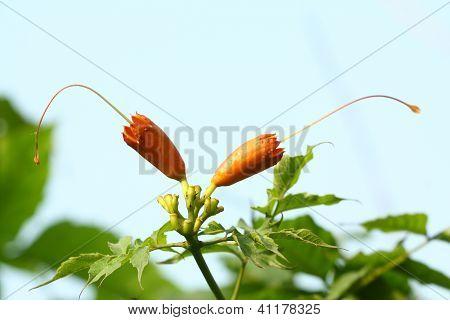 Plant Flower Bud
