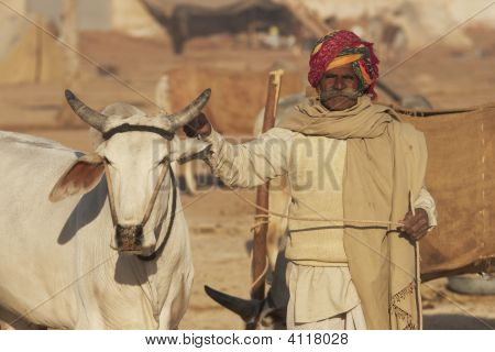 Indian Man And His Prize Bullock