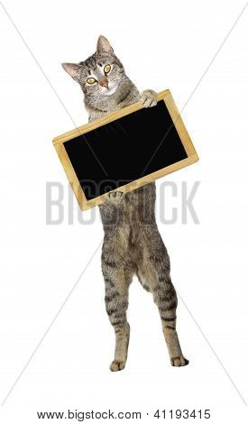 Funny Cat Holding A Blank Small Blackboard