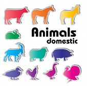vector domestic animals silhouettes poster