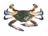 image of crustations  - Image set of Crab in isolated white background - JPG
