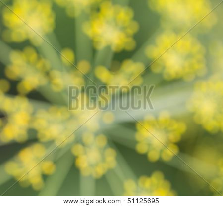 Blurred Abstract Green-yellow Background, Blurred Dill