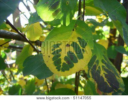 Motley wood leaf