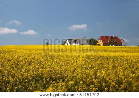 Yellow Rape Field And Farmhouses