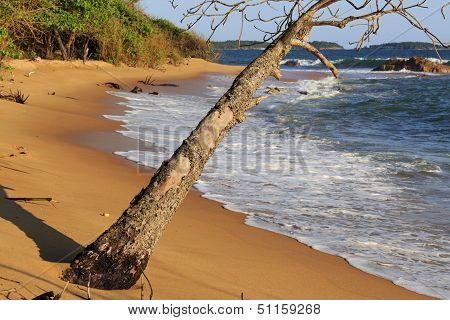 Dead Tree On Deserted Beach