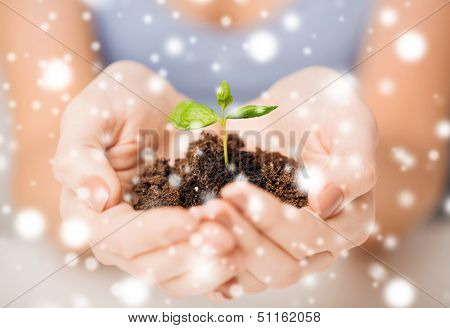 eco, bio, environment, growth, care concept - woman hands with green sprout and ground