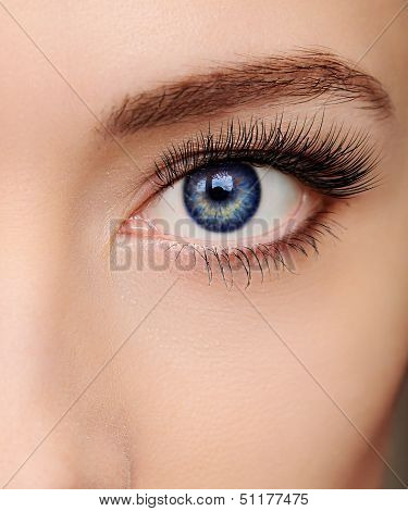 Closeup Beautiful Blue Woman Eye With Long Salon Lashes Looking