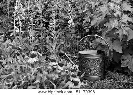 Black and white still life of old fashioned watering can in garden.  Shallow dof with focus on the can.
