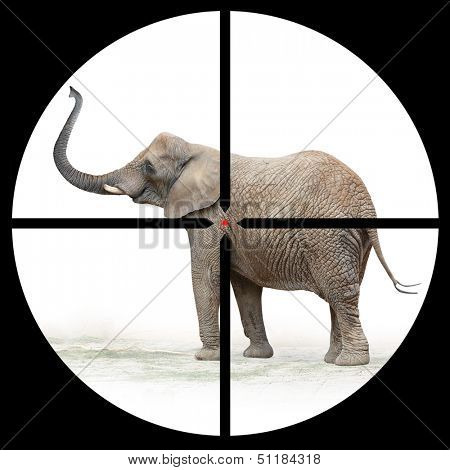 African elephant in the Hunter's scope.