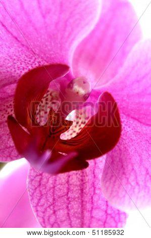 Orchidaceae Plant