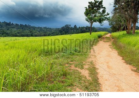 Tropical meadow and path under dramatic stormy sky in Khao yai national park, Thailand