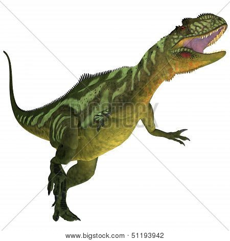 Yangchuanosaurus On White