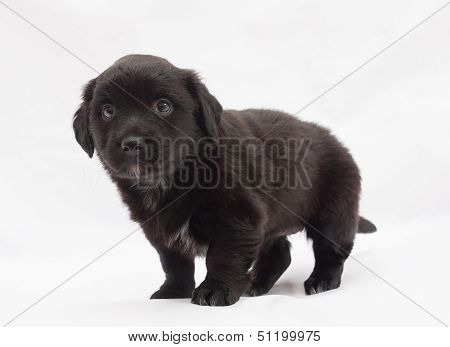 Black Puppy With White Spots