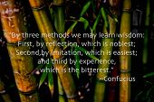 picture of confucious  - Bamboo and quote by Confucious  - JPG
