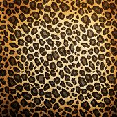 stock photo of leopard  - Leopard pattern background or texture close up - JPG