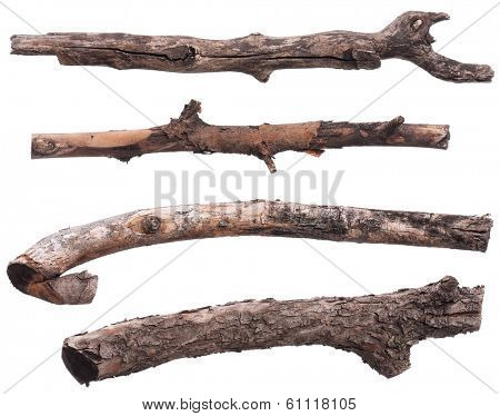 Set of dry tree branch, isolated on white background