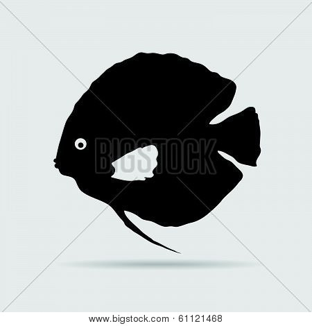 Discus Fish Vector