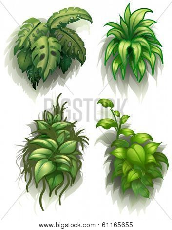 Illustration of the leafy plants on a white background