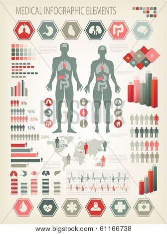 Medical infographics elements. Human body with internal organs. Vector.