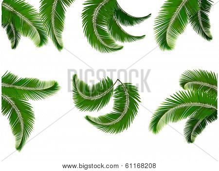 Set green branches with leaves of palm trees. Raster version