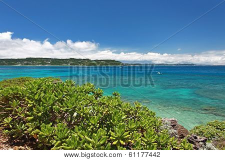 Beautiful subtropical Okinawa