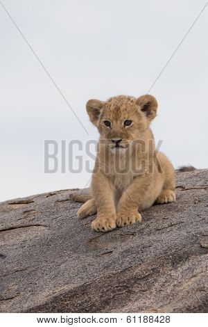 Lion Cub On Gol Kopjes In Serengetti National Park