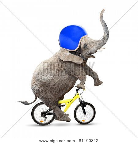 Funny elephant with protective helmet riding a bike. Safety and insurance concept.