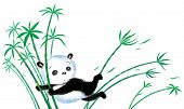 foto of wind blown  - Panda sitting on bamboo blown away by the wind - JPG