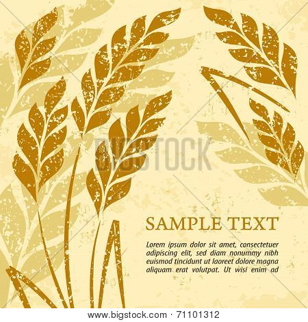 Ears Of Wheat Background On Grange