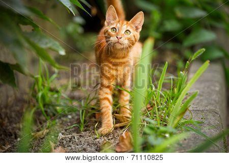 Cute domestic kitten looking up, outdoor