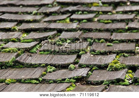 Wooden roof with moss