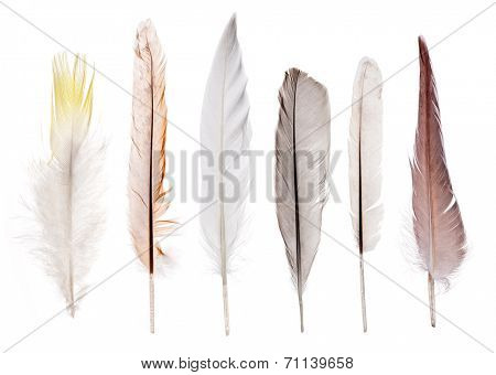set of six feathers isolated on white background
