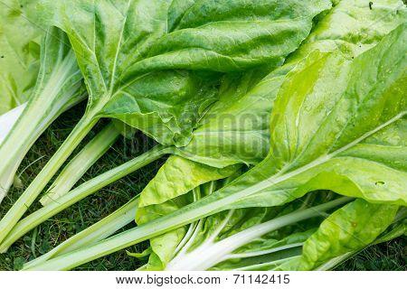 Beet Spinach