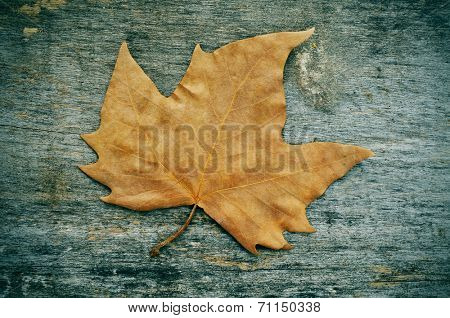 a dried leaf in autumn on a weathered wooden background