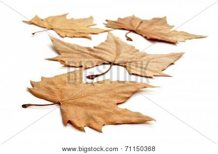 picture of a pile of dried leaves in autumn on a white background
