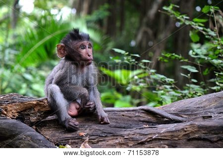 Baby Monkey Sitting On A Log