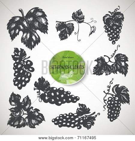 Hand Drawn Set Of Grapes And Leaves. Vector Illustration