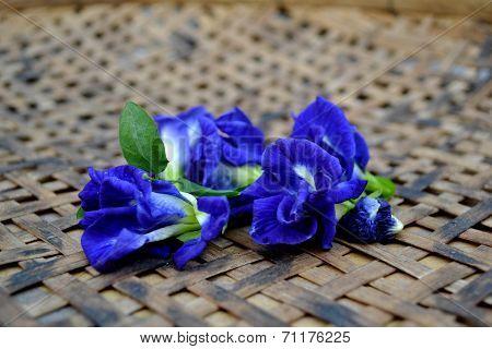 Herb flower