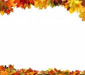 stock photo of orange-tree  - autumn leaves - JPG