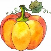 stock photo of gourds  - Watercolor painted vector pumpkin on white background - JPG