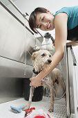 stock photo of water animal  - Portrait of young female animal groomer spraying water on dog - JPG