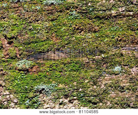 Mossy Wood Background