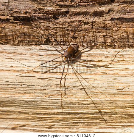 Big Scary Spider