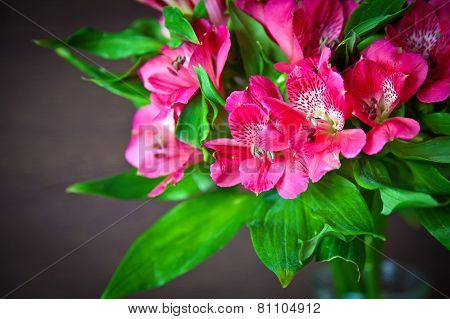 Pink Flowers Of Alstromeria