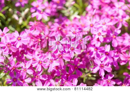 small pink flowers glade as background
