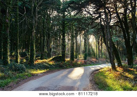 Morning in the green forest. Portugal, Sintra