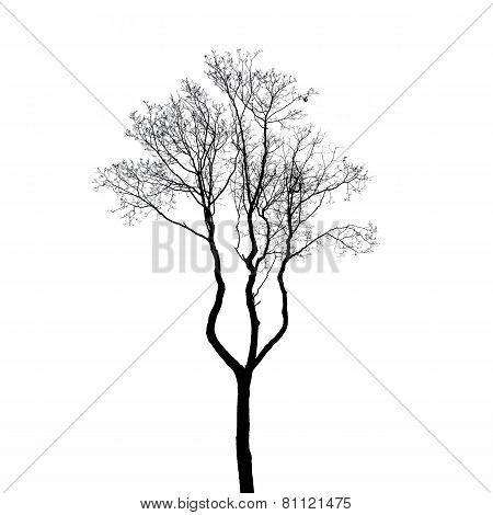 Leafless Tree Silhouette Isolated On White