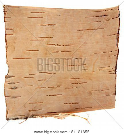 birch bark isolated on white background
